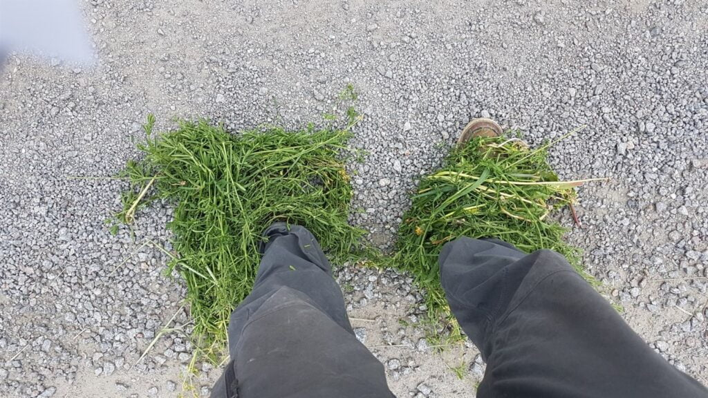 ben och fötter helt täckta i snärjande måror och stickande agnar.